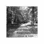 Suburbs of Chicago Forest Preserve Environment Sound Effects Library